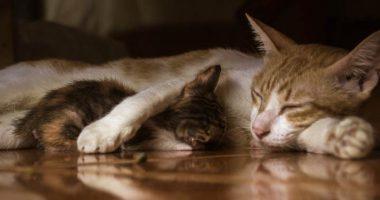 Perche i gatti dormono cosi tante ore